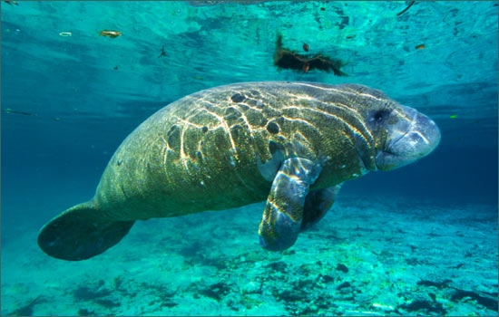 Manatee Protection